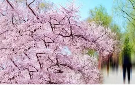 高尔夫鑫城:春风十里,不如你